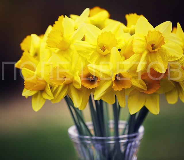 ЦветокТорг - Заказ и доставка цветов 35